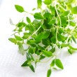 Thyme herb on white tablecloth — Stockfoto