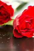 Red roses macro water drops — Stock Photo