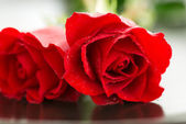 Red roses macro — Stock Photo