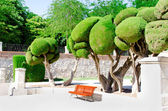 Trees and bench at park of the Pleasant Retreat in Madrid — Stock Photo
