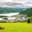 Rural scene with cow in Norway — Stock Photo