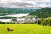 Escena rural con vaca en noruega — Foto de Stock