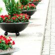 Street flowers in a row — Stock Photo