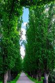Träd gränd — Stockfoto