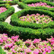 Flower bed in summer park — Stock Photo