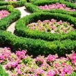 Stock Photo: Flower bed in summer park