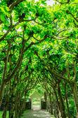 Träd tunnel — Stockfoto
