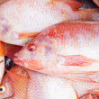 Fresh Nile Talapia Fish — Stock fotografie