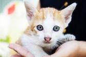 Cutie Kitten — Stock Photo