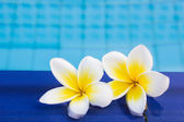 Frankipani On The Pool For Spa Concept — Stock Photo