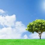 Mango tree with background — Stock Photo
