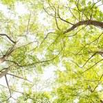 Вверх на деревьях — Стоковое фото