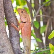 Lizard in nature,iguana — Stockfoto #31192189