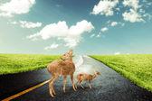 Deer Crossing Road — Stock Photo