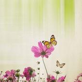 Cosmos Flower Background — Stockfoto