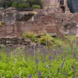 Stock Photo: Roman Forum ruins. Rome, Italy