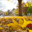 Stock Photo: Autumn foliage in town