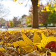 Foto de Stock  : Autumn foliage in town