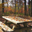 Stock Photo: Picnic table in Autumn forest