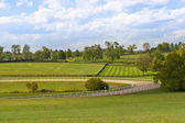 Country scenery with horse training track — Stock Photo