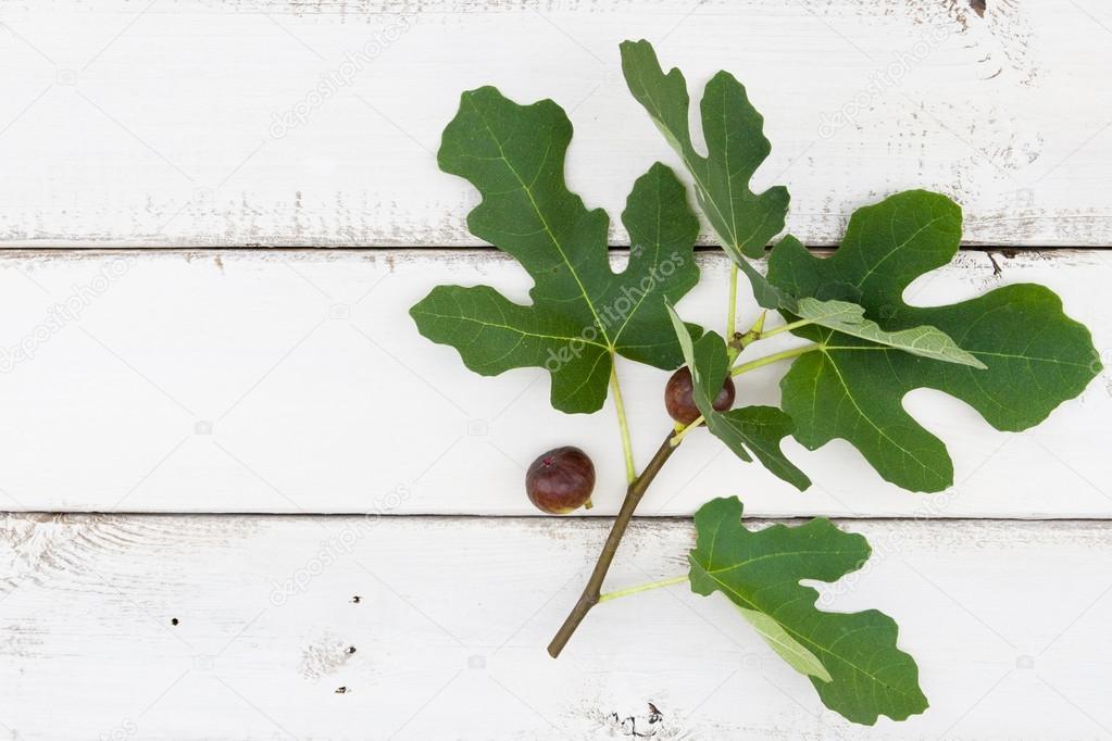 branche de figuier avec fruits m rs de figue fra che et feuilles sur r blanc photographie. Black Bedroom Furniture Sets. Home Design Ideas