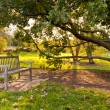 Bench and oak tree in city park in the autumn -  