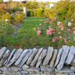 Rose garden behind a stone wall — Stock Photo