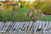 Rose garden behind a stone wall — 图库照片
