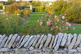 背后一堵石墙的玫瑰花园 — 图库照片