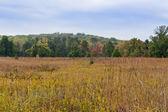Jesień krajobraz las i łąka na pierwszym planie — Zdjęcie stockowe