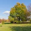 Big autumn tree and green grass in a park — Stock Photo