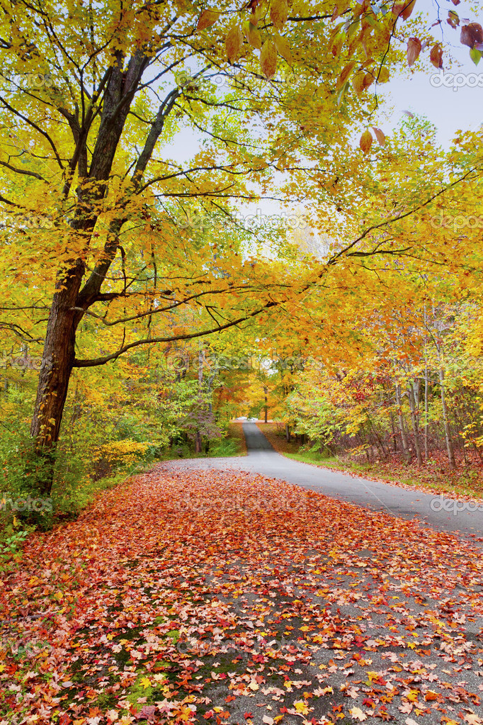 Road in autumn forest — Stock Photo #15357695