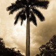 Stock Photo: Palm tree silhouette under cloudy sky in black and white.