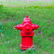 Stock Photo: Red fire hydrant in park at summer.