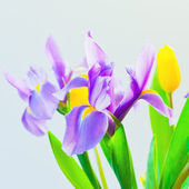 Fresh spring tulips and iris flowers on bluish background. sele — Stock Photo