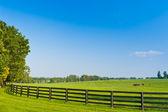 Cenário do país. paisagem de verão. — Foto Stock