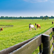 Country summer landscape. - Stock Photo