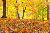 Beautiful autumn trees and leaves on the ground in park — Stock Photo