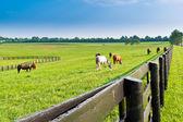 Paisagem de verão do país. — Foto Stock