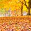 Colorful autumn leaves with forest blurred background.  — Stock Photo #22344427