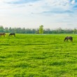 Horses at farmland - 图库照片