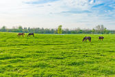 Horses at farmland — Stock Photo