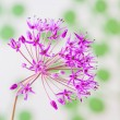 Stock Photo: Decorative allium flower on abstract background