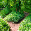 Stock Photo: Footpath in summer green forest