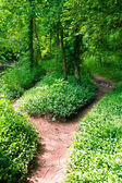 Footpath in summer green forest — Stock Photo