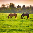 Stock Photo: Horses at farmland