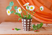 Still life with daisy flowers and red currant — Foto de Stock