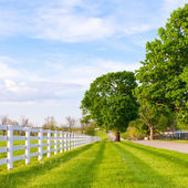 Country road surrounded the horse farms — Stock Photo