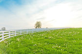 Green pastures of horse farms. — Foto de Stock
