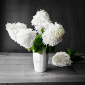 Bouquet of white hydrangea flowers on a dark grunge background. — ストック写真